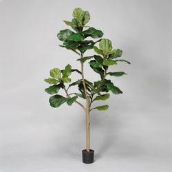 Green 5'H Polyester Potted Fiddle Tree w/50 Lvs