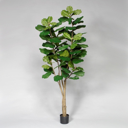 Green 7'H Polyester Potted Fiddle Leaf Fig Tree w/89 Lvs