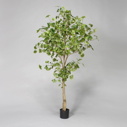 Green 6'H Polyester Potted Ginkgo Tree w/702 Lvs