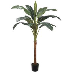 Green 6'H Banana Tree w/13 Leaves in Pot